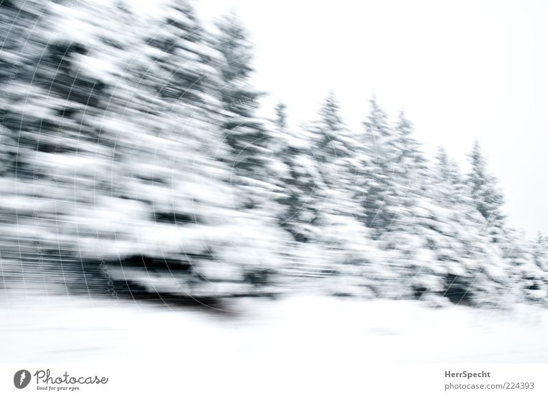 Winter Forest on Speed Nature Landscape Bad weather Snow Driving Green White Winter forest Fly-by Fir tree Snowscape Winter mood Colour photo Subdued colour
