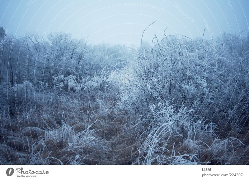 icily Nature Landscape Winter Beautiful weather Ice Frost Snow Tree Grass Bushes Wild plant Meadow Field Forest Freeze Cold Blue Black Silver White Colour photo