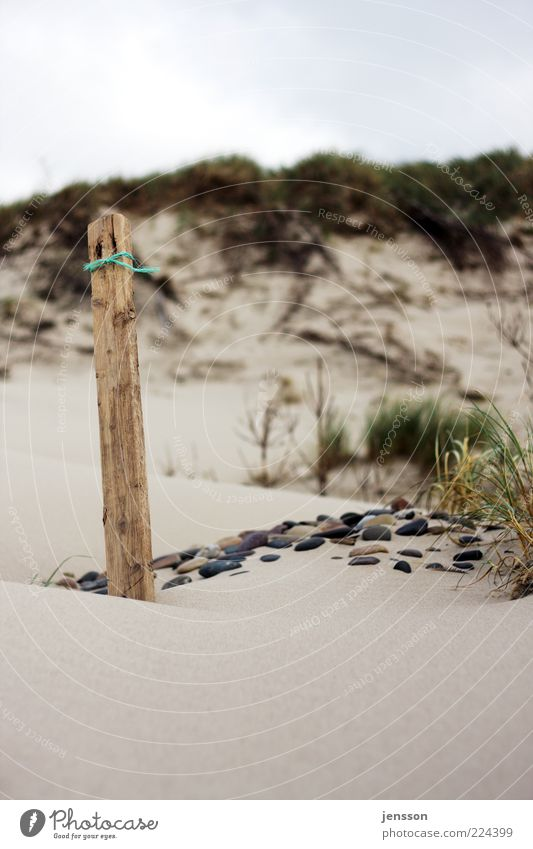 Snøre Environment Nature Landscape Sand Coast Beach Stone Wood Stand Calm Grass Flotsam and jetsam Wooden stake Pole Beach dune Marram grass Colour photo Detail