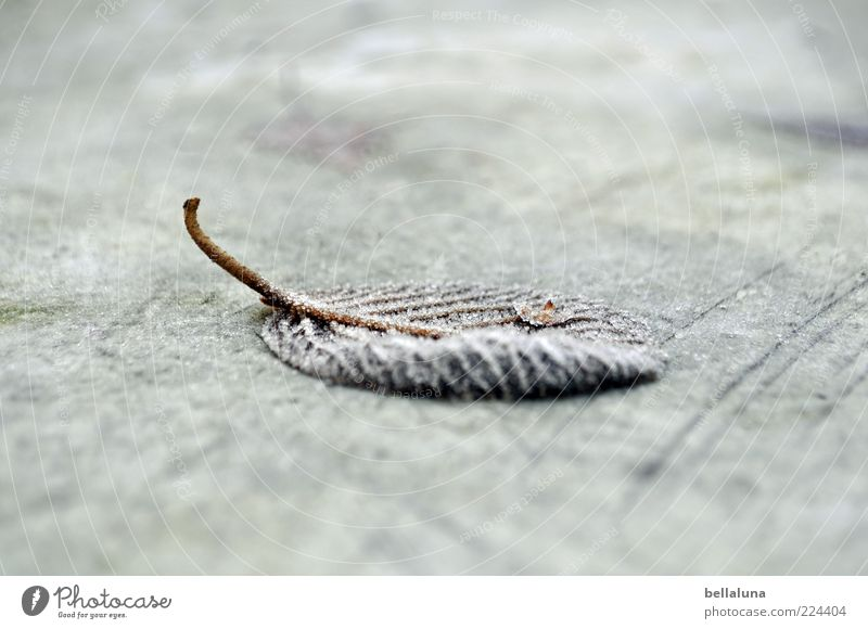 Nature Plant Winter Leaf Cold Ice Lie Floor covering Frost Frozen Stalk Shriveled Hoar frost Blur Rachis