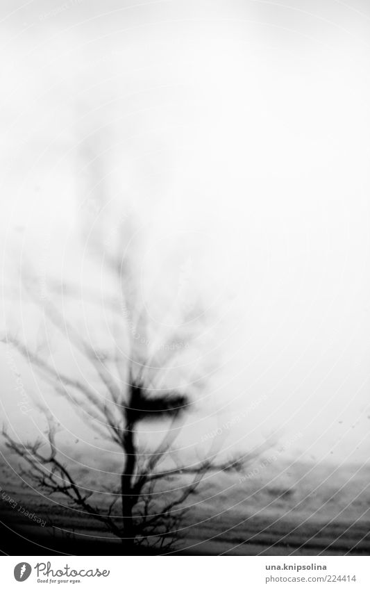 Tree Winter Dark Snow Abstract Unclear Twigs and branches Discern Leafless