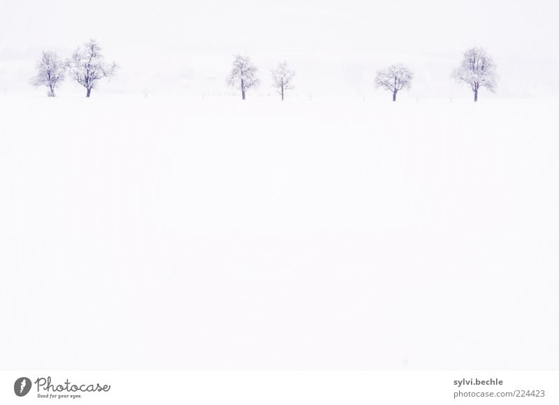 a hint of nothing Environment Nature Landscape Sky Winter Climate Weather Snow Tree Field Cold White Calm Loneliness Subdued colour Exterior shot