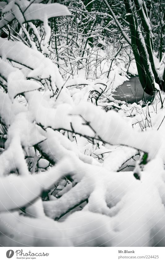 Nature Water White Tree Calm Winter Far-off places Black Forest Cold Snow Environment Weather Ice Wait Frost