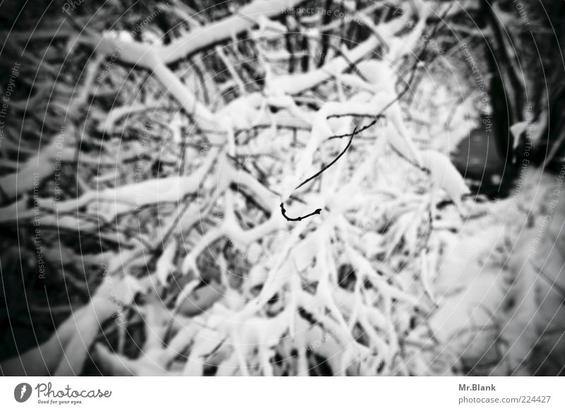 Nature White Plant Loneliness Black Forest Cold Dark Snow Sadness Ice Wait Frost Bushes Branch Observe