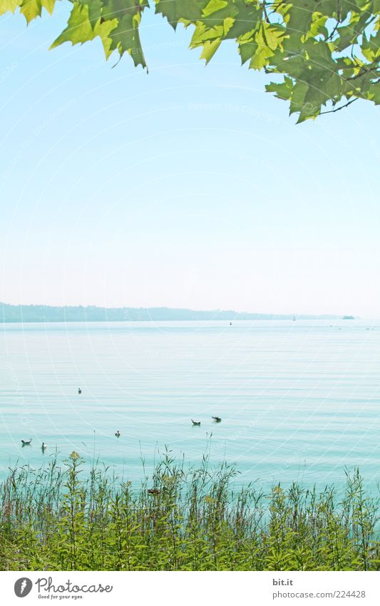 the better season Environment Nature Landscape Water Sky Cloudless sky spring Summer Climate Beautiful weather flaked Foliage plant Lakeside Lake Constance Wet