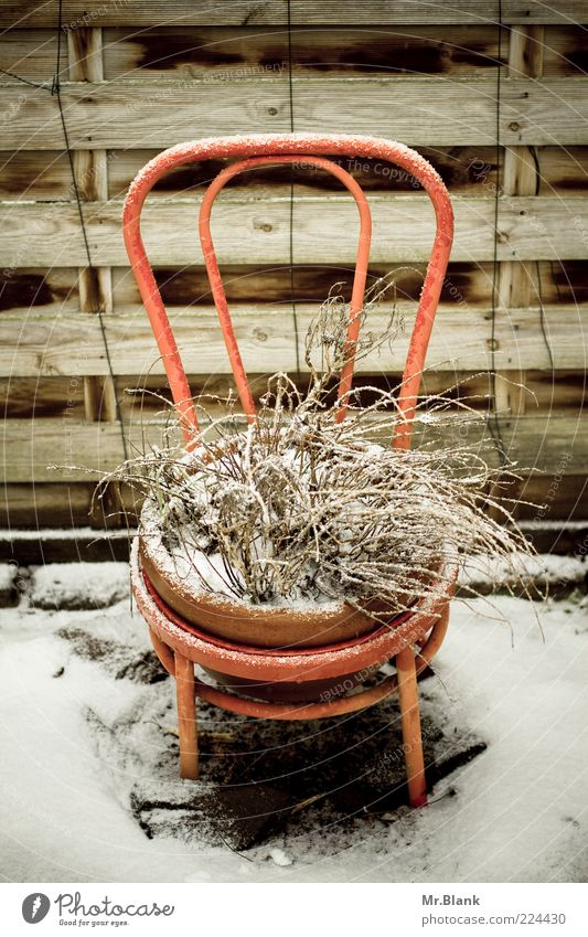 winter time is rest period II Flat (apartment) Garden Winter Ice Frost Snow Plant Wait Old Authentic Brown White Sadness Longing Loneliness Chair Backrest
