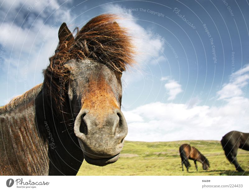 Sky Nature Clouds Animal Landscape Moody Funny Wind Wait Esthetic Horse Wild Stand Natural Wild animal Group of animals