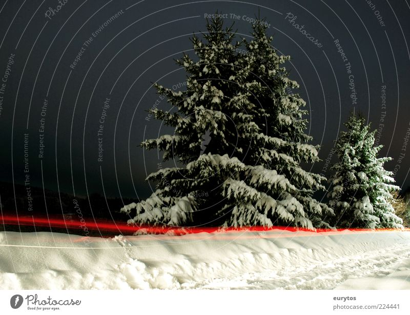 Nature White Tree Red Winter Black Snow Landscape Environment Ice Climate Frost Illuminate Fir tree Roadside Snow layer