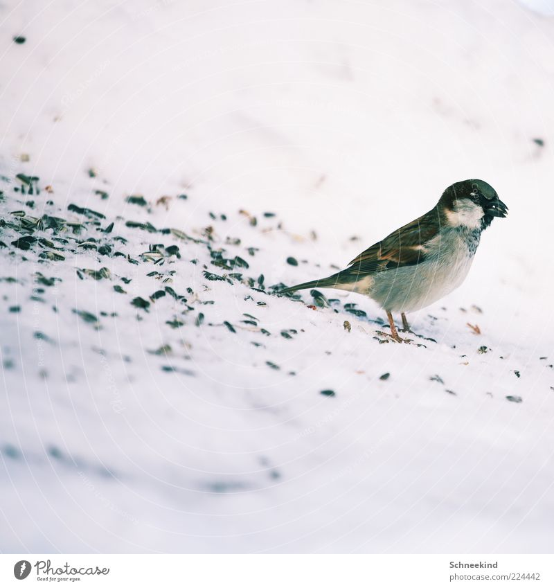 meal Environment Nature Animal Wild animal Bird 1 Observe To feed Feeding Esthetic Brash Beautiful Love of animals Patient Calm Sparrow Birdseed Sweet Spectacle