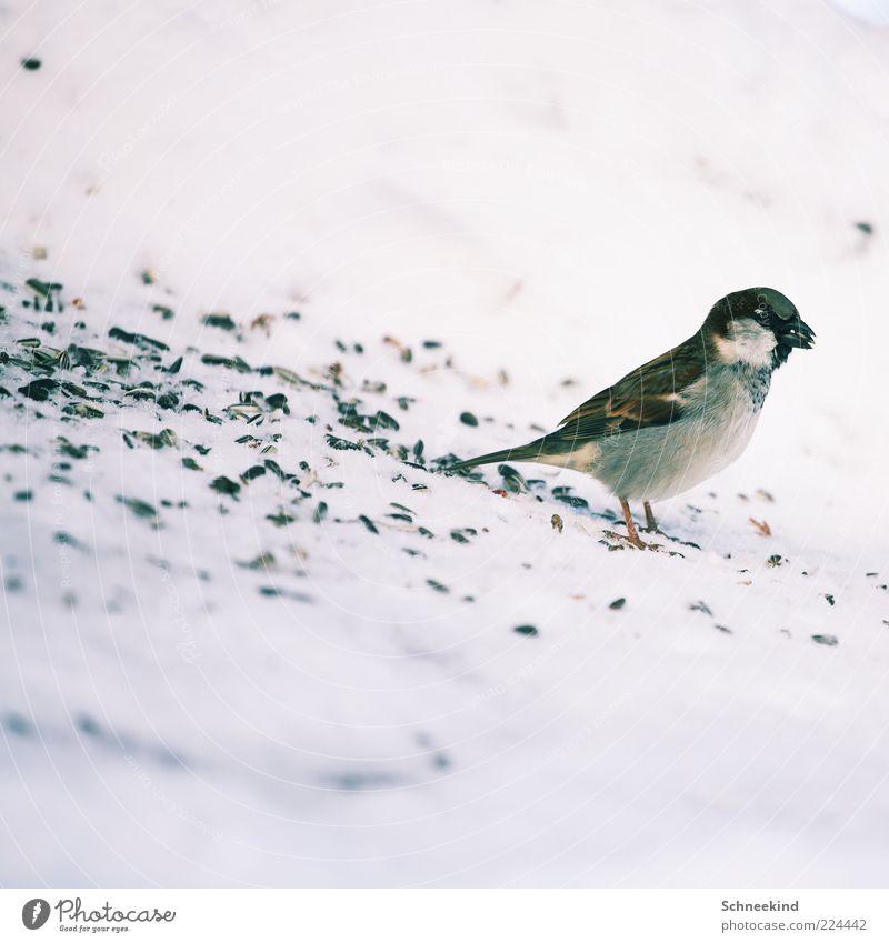 Nature Beautiful Calm Animal Environment Bird Esthetic Sweet Wild Wild animal Observe Brash To feed Patient Feeding Sparrow