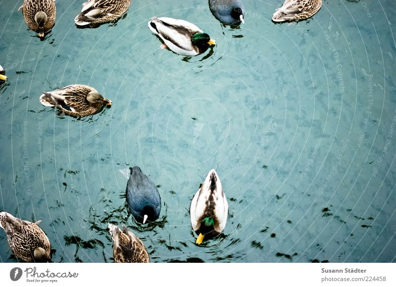 Water Animal Movement Bird Waves Swimming & Bathing Wild animal Masculine Wing Group of animals Feather Float in the water Duck Surface of water Drake