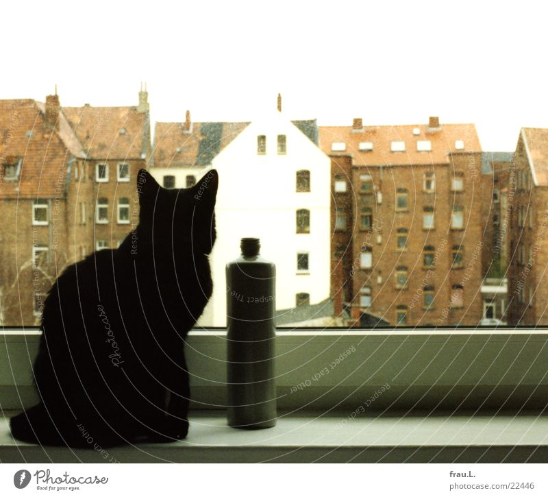 House (Residential Structure) Black Animal Window Cat Flat (apartment) Living or residing Observe Desire Longing Bottle Captured Mammal Backyard Hannover Window board