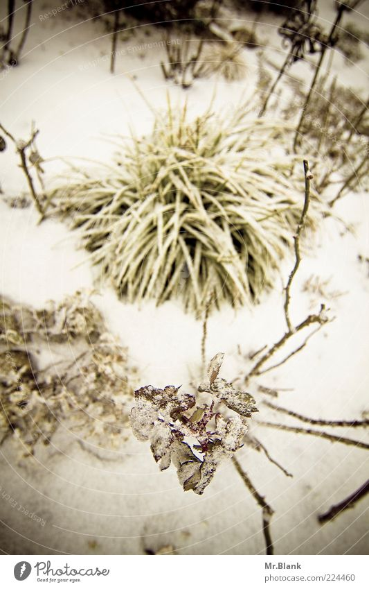 winter II Nature Plant Winter Ice Frost Snow Garden Dark Cold White Leaf Subdued colour Exterior shot Deserted Day Blur Bird's-eye view Calm Snow layer