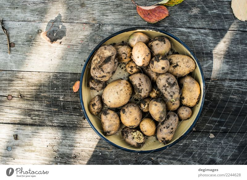 Potatoes with dirt Nature Plant Natural Garden Earth Fresh Ground Vegetable Farm Harvest Home Agriculture Gardening Consistency Root Raw