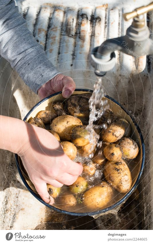 Wash potatoes in home garden Vegetable Diet Bowl Woman Adults Hand Fresh Delicious Natural Clean White Potatoes Washing water Raw food healthy Organic cooking