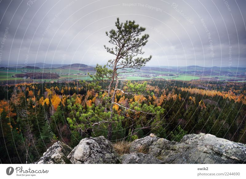 bellevue Environment Nature Landscape Plant Clouds Autumn Beautiful weather Tree Rock Peak Zittau Mountains triangle Lausitz forest Saxony Germany Tall Above