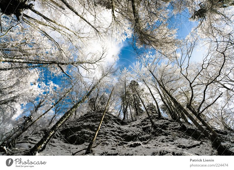 wolf's ravine Environment Nature Landscape Elements Air Sky Clouds Winter Weather Beautiful weather Snow Plant Tree Forest Hill Rock Mountain Canyon Cold Moody