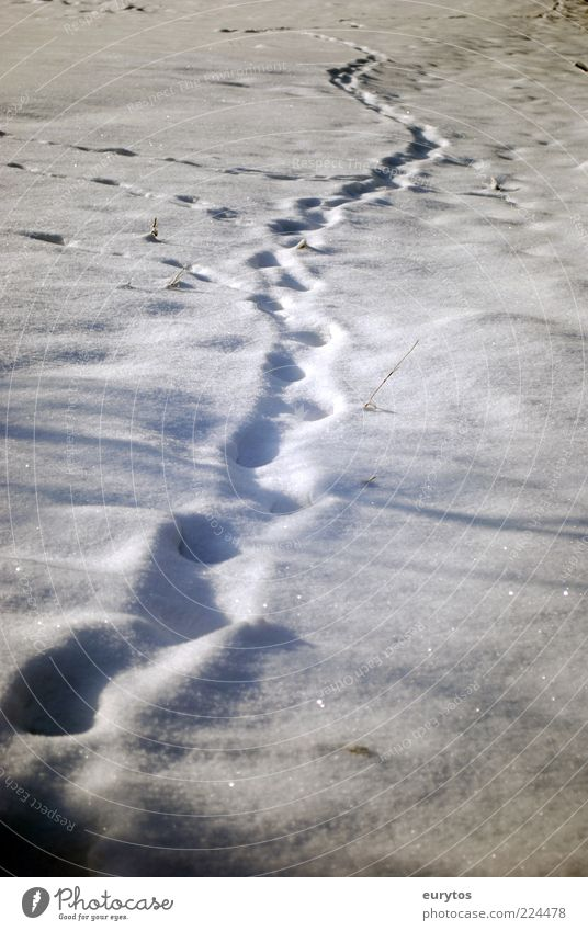 The Yeti doesn't believe in Reinhold Messner. Nature Climate change Weather Ice Frost Snow White Tracks Footprint Winter Colour photo Exterior shot Deserted Day