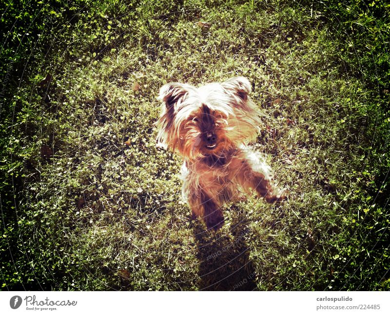 Animal Pet Dog To enjoy Jump Lawn Animal lover Field Colour photo Exterior shot
