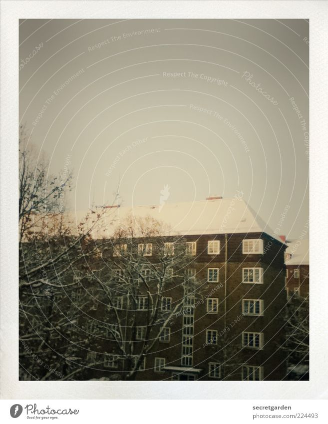 White City Tree Calm Winter House (Residential Structure) Dark Cold Snow Window Architecture Building Brown Ice Facade Retro