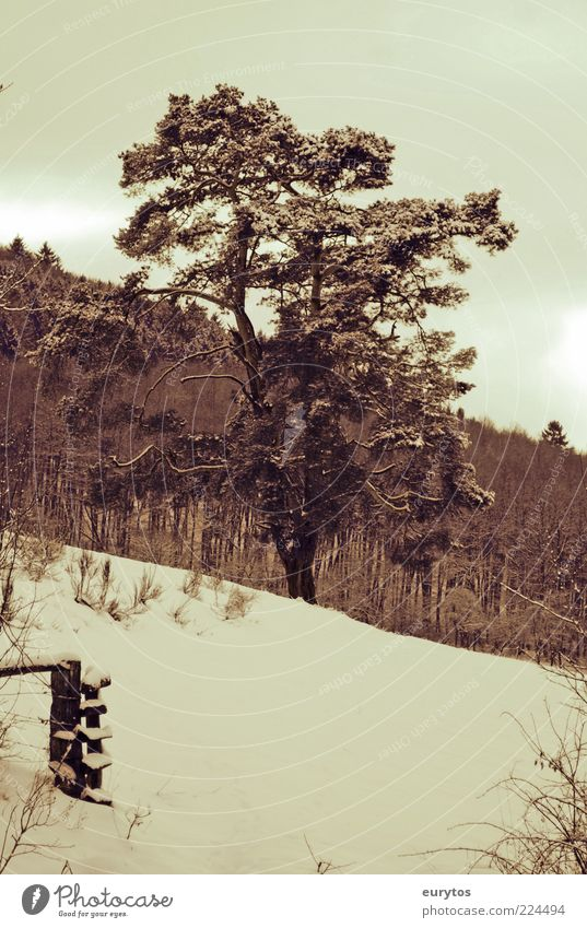 Nature Tree Plant Winter Forest Snow Landscape Environment Weather Climate Pasture Treetop Bad weather Climate change Slope Pine