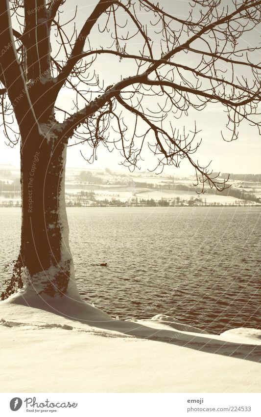 Nature White Tree Plant Winter Animal Snow Landscape Environment Lake Brown Climate Branch Tree trunk Lakeside Duck