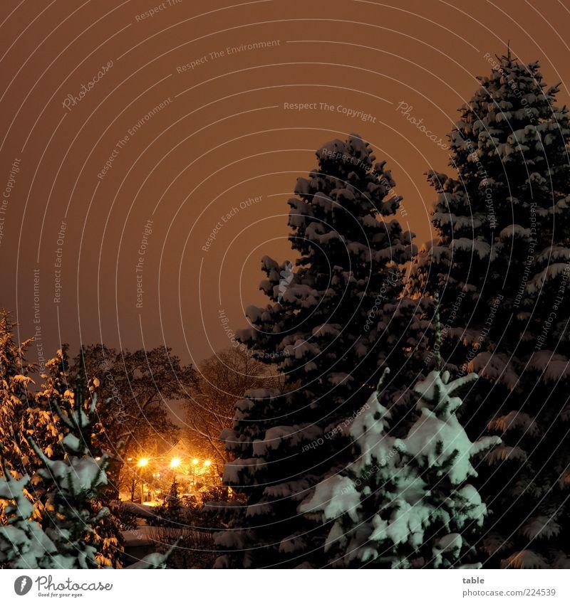 Sky White Tree Plant Calm Winter Black Yellow Cold Dark Snow Gold Climate Romance Illuminate Street lighting