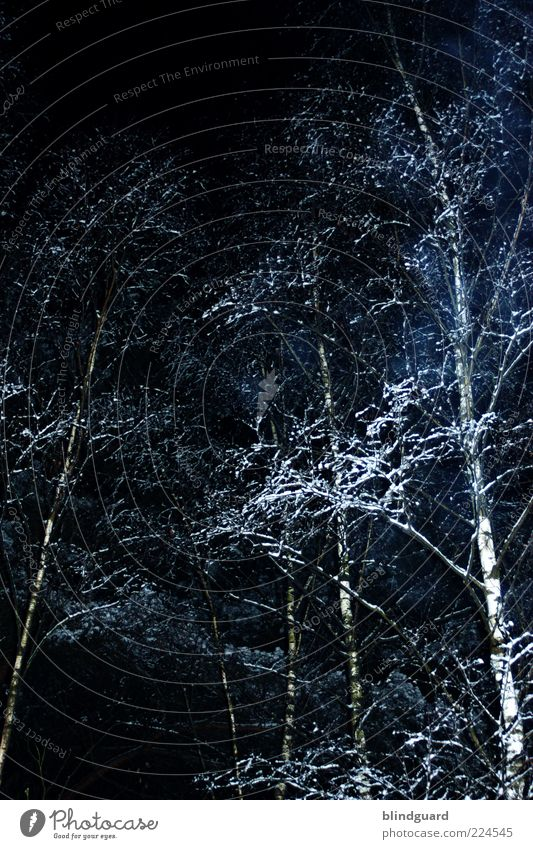 ghost trees Nature Plant Ice Frost Snow Forest Wood Dark Cold Black White Colour photo Exterior shot Deserted Night Flash photo Light Contrast Reflection