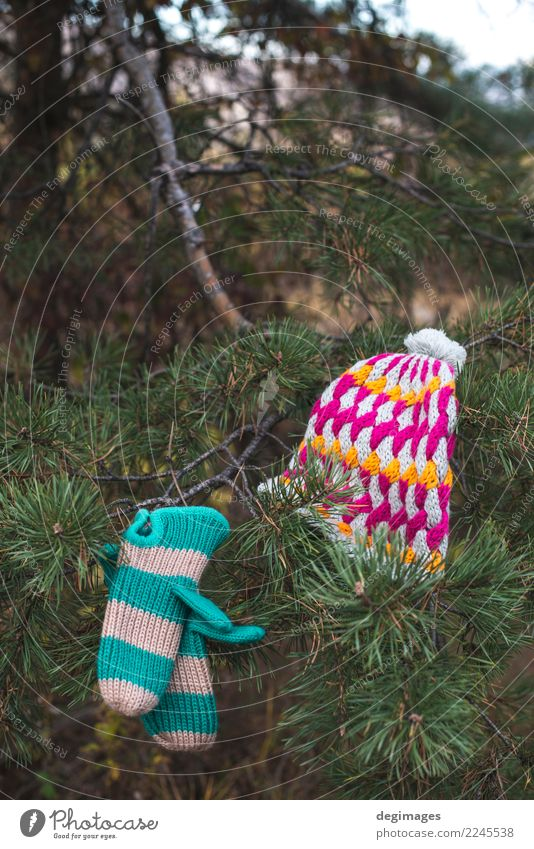 Winter hat and gloves on a tree Nature Autumn Weather Warmth Forest Clothing Accessory Gloves Hat White fir branch christmas cold mittens Wool Seasons Knitted