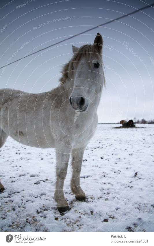 Sky White Blue Winter Animal Life Cold Snow Freedom Ice Contentment Fresh Horse Ground Curiosity Pasture