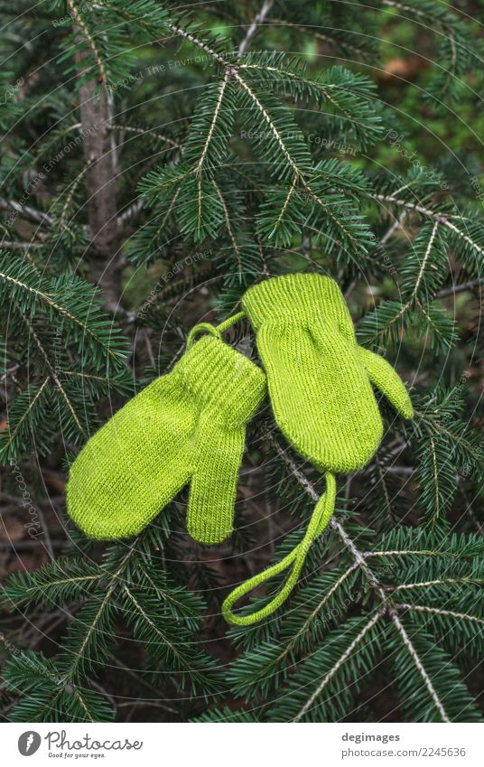 Winter green gloves on fir Christmas & Advent Green Tree Warmth Wood Feasts & Celebrations Decoration Clothing New Seasons Pine Gloves Rustic