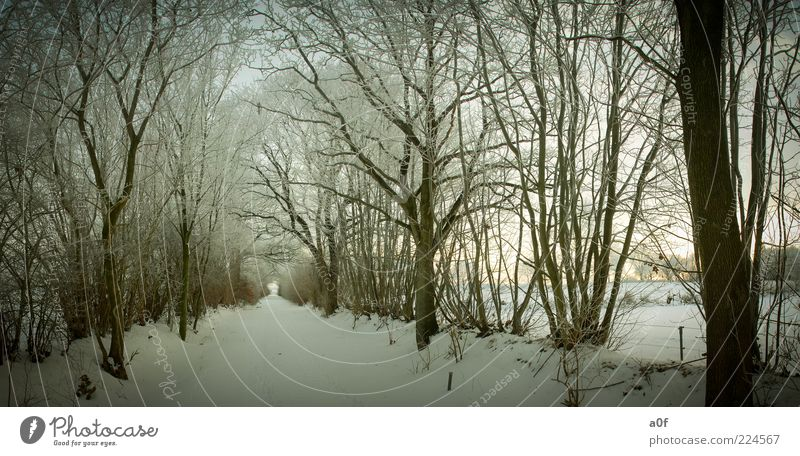 Way between trees Environment Nature Landscape Winter Lanes & trails Snow Brown Cold Subdued colour Exterior shot Deserted Evening Twilight Deep depth of field