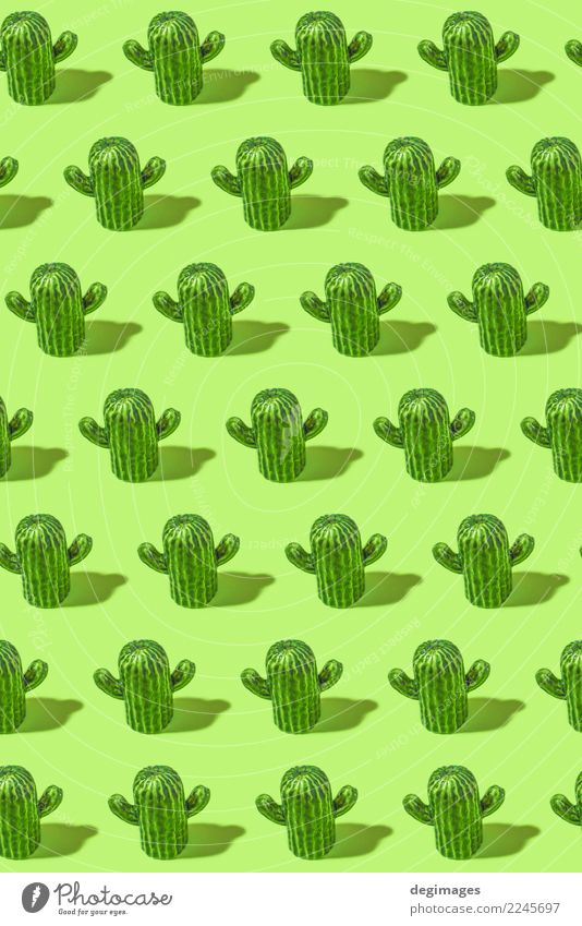 Cactus pattern Design Beautiful Summer Decoration Plant Flower Green background Succulent plants desert botanical thorn close sharp Vantage point cacti isolated