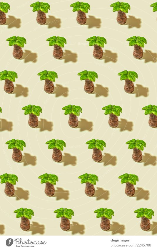 Palm pattern Exotic Life Spa Summer Nature Plant Tree Leaf Forest Bright Green White palm background Tropical Consistency Coconut isolated palms branch