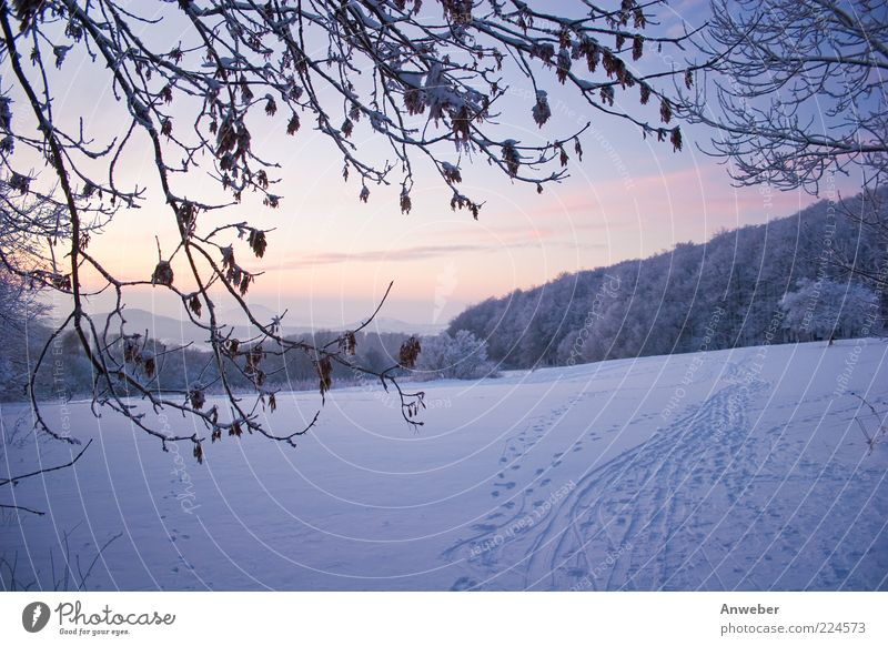 Nature White Blue Plant Winter Leaf Cold Meadow Snow Mountain Landscape Environment Moody Bright Park Weather