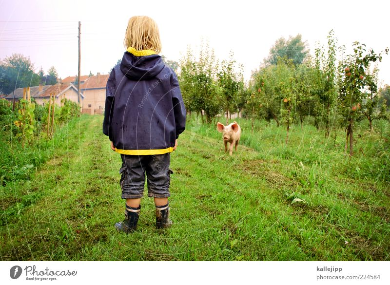 2011 - good luck! Child Boy (child) Life Human being 3 - 8 years Infancy Animal Farm animal Baby animal Looking Swine Encounter Happy Rain jacket Apple tree