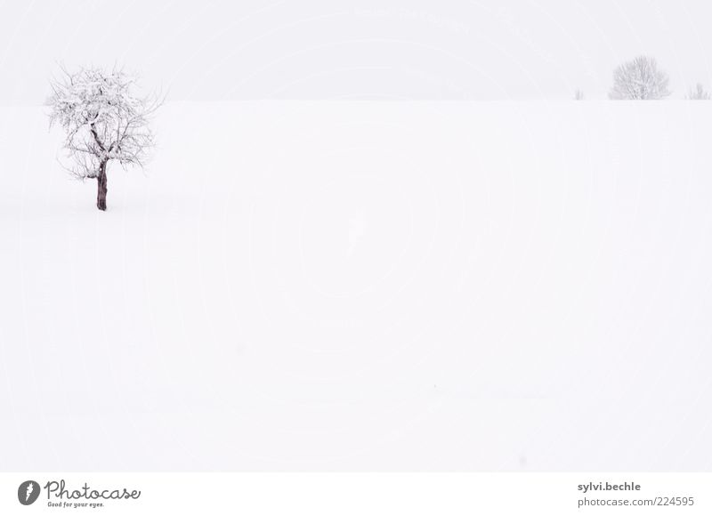 Sky Nature White Tree Calm Winter Loneliness Far-off places Black Cold Meadow Snow Gray Landscape Environment Ice