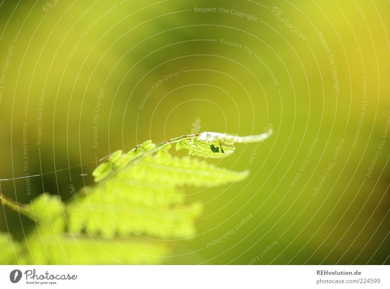 Recently in the forest Environment Nature Plant Fern Foliage plant Wild plant Growth Esthetic Natural Green Sustainability Spider's web Macro (Extreme close-up)