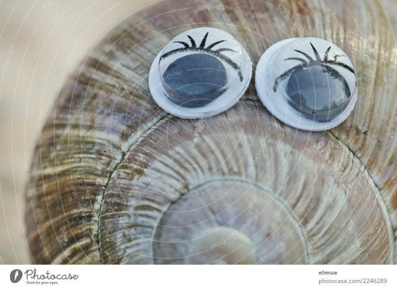 funny snails (9) Design Joy Beautiful Handicraft Snail Vineyard snail Snail shell Housing Spiral Whorl Eyes look Eyelash Cool (slang) Elegant Happiness