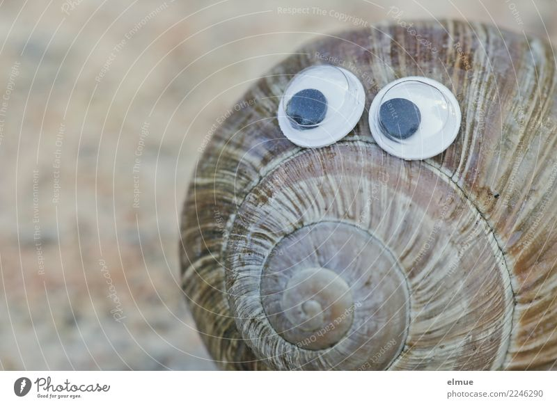 funny snails (1) Snail Snail shell Line Spiral Eyes Eyewitness Observe Looking Playing Cool (slang) Near Curiosity Cute Joy Happy Happiness