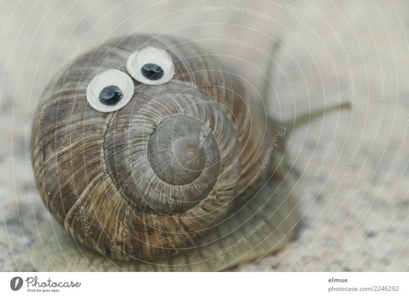 funny snails (5) Snail Vineyard snail Snail shell Feeler Eyes Spiral Facial expression Screw thread Happiness Delicious Near Slimy Joy Joie de vivre (Vitality)