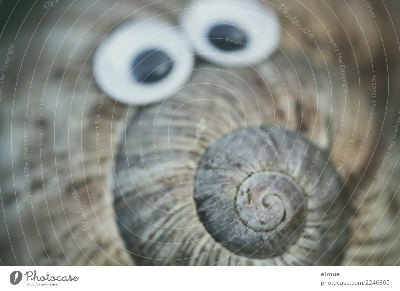 funny snails (3) Snail Snail shell Housing Eyes Spiral Screw thread Facial expression Looking Brash Cute Joy Joie de vivre (Vitality) Dream Design Discover