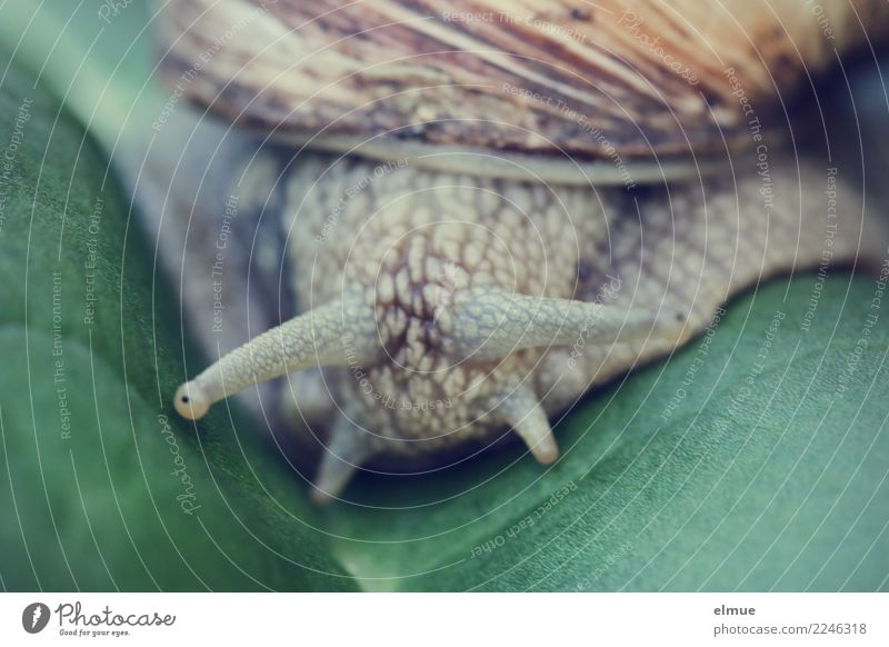 under observation Organic produce Leaf Wild animal Snail Vineyard snail Feeler Eyes Snail shell Authentic Disgust Cold Small Slimy Contentment Prompt Caution