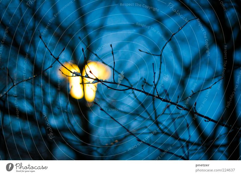 Light in the dark Nature Sky Winter Plant Tree Illuminate Bright Cold Blue Yellow Emotions Lantern Lighting Ice Freeze Night Dark Colour photo Exterior shot