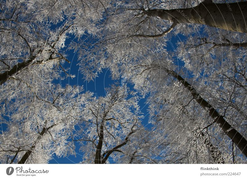 Sky Nature Tree Beautiful Winter Snow Environment Moody Ice Frost Branch Freeze Treetop Cloudless sky
