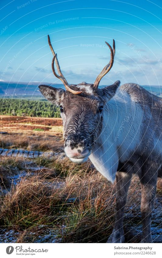 It's me, Rudolph. Animal Wild animal Animal face 1 Breathe Observe Discover Relaxation Eating Feeding To enjoy Smiling Hiking Authentic Elegant Free Happy