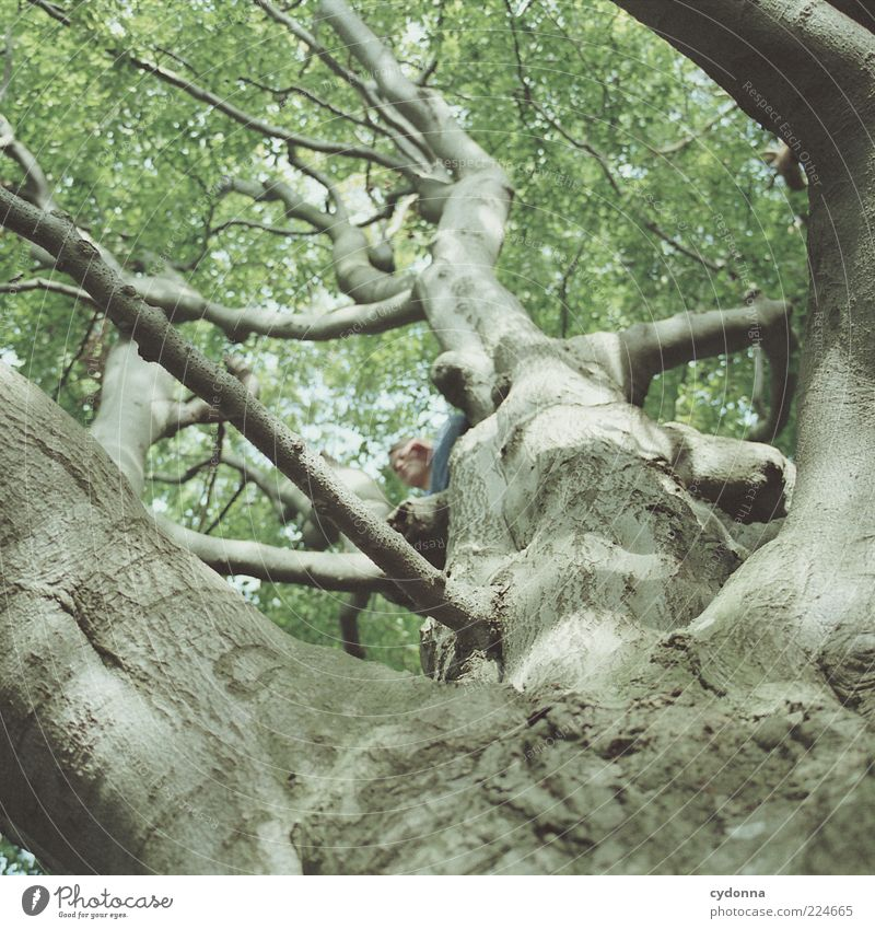 tree hiding place Lifestyle Leisure and hobbies Freedom Summer vacation Human being Environment Nature Tree Movement Uniqueness Mysterious Idea Idyll