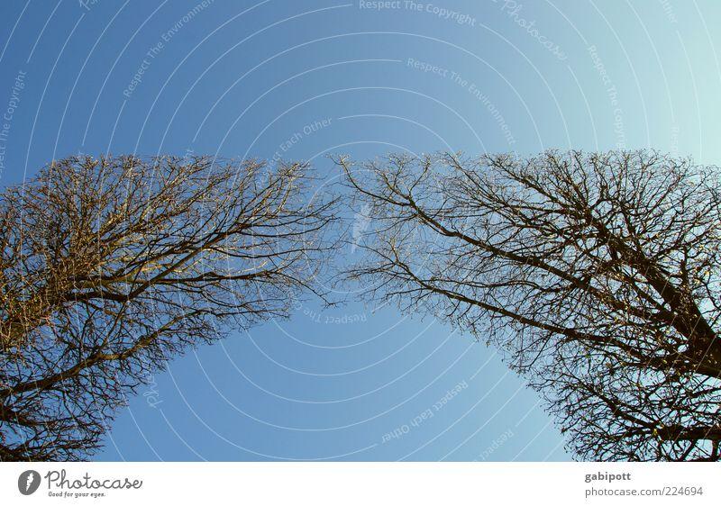 Sky Nature Blue Tree Plant Landscape Garden Air Park Line Growth Beautiful weather Gate Joie de vivre (Vitality) Upward Symmetry