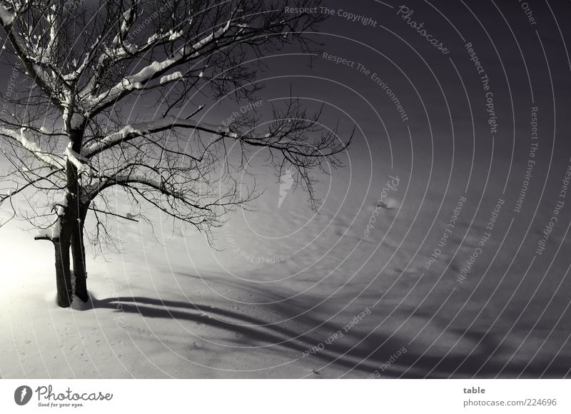 Nature White Tree Plant Winter Black Cold Dark Snow Emotions Gray Landscape Environment Small Ice Frost