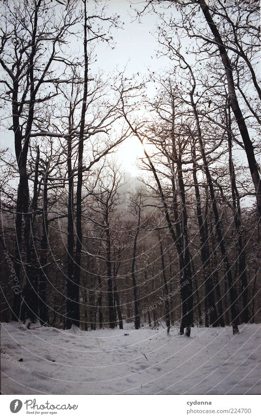winter forest Relaxation Calm Environment Nature Landscape Winter Snow Tree Forest Freedom Mysterious Life Stagnating Lanes & trails Time Thueringer Wald